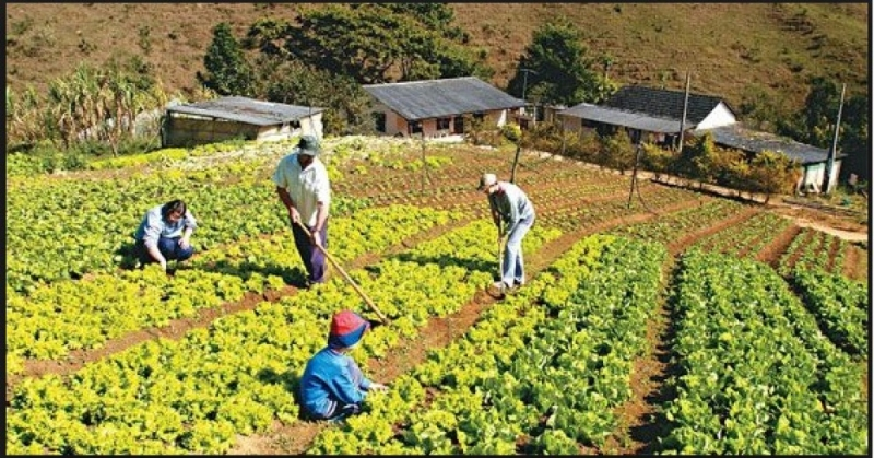 Programa \'Semeando Sustentabilidade\' da Prefeitura de Catas Altas distribui quase 2 mil pacotes de sementes em 2017