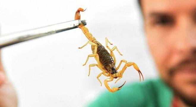 Veneno do escorpião é utilizado para combater células com câncer