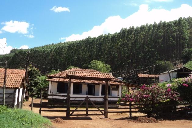 Fomento Florestal da CENIBRA garante renda para produtores rurais
