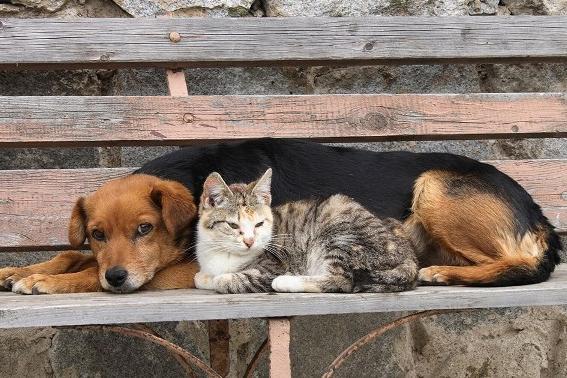Mesmo sem transmitir o coronavírus, cães e gatos têm sido abandonados
