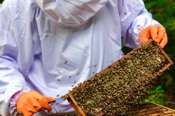 Demanda por mel e derivados aumenta 30% durante pandemia