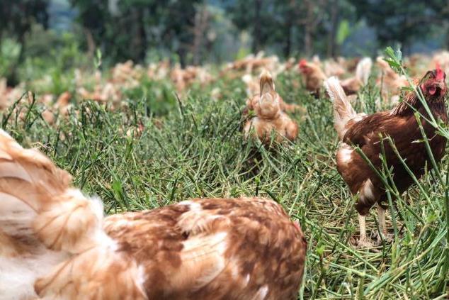 Produtores rurais mantêm rotina no campo enquanto centros urbanos seguem em quarentena