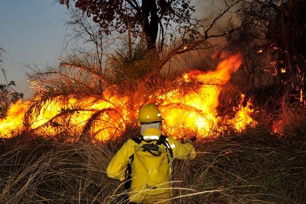 Plano para combate a incêndios florestais tem reforço de R$ 14 mi em Minas