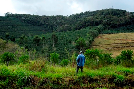 Projeto Conexão Mata Atlântica abre edital para beneficiários da Zona da Mata
