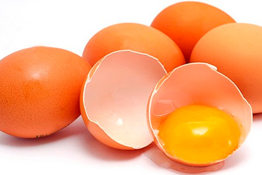 Pesquisa do IBGE aponta novo recorde na produção de ovos de galinha