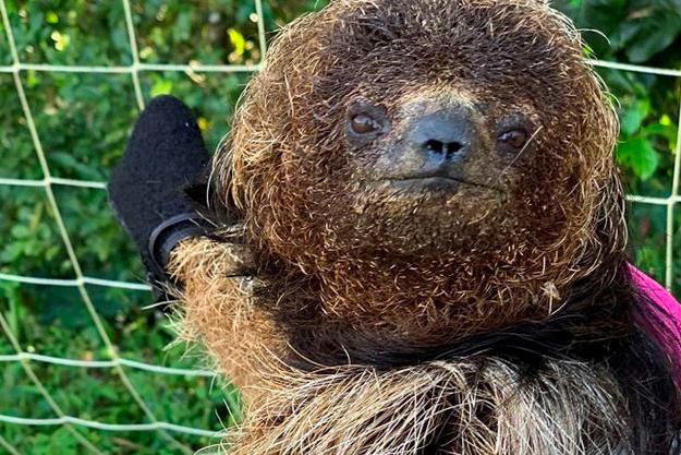 Expedição inédita vai mapear a preguiça de coleira, no norte da Bahia
