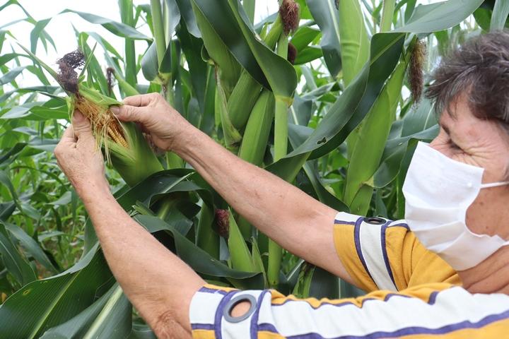 Projeto agrícola parceiro da CENIBRA produz 100 toneladas de alimentos por ano